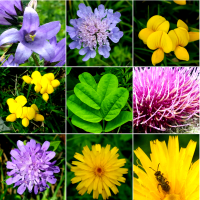 MAGNI-FLOWER: MAGNIFICATIONS OF ALPINE FLORA