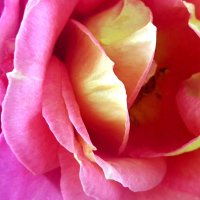 THE YEAR OF THE ROSES / MACRO PHOTOGRAPHS AND LIGHT TRANSPARENCY (#4)