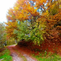 INCREDIBLE AUTUMN! THE SPELL OF NATURE THAT PAINTS EXTRAORDINARY PALETTES OF COLORS #1
