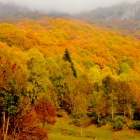 INCREDIBLE AUTUMN! THE SPELL OF NATURE THAT PAINTS EXTRAORDINARY PALETTES OF COLORS #2