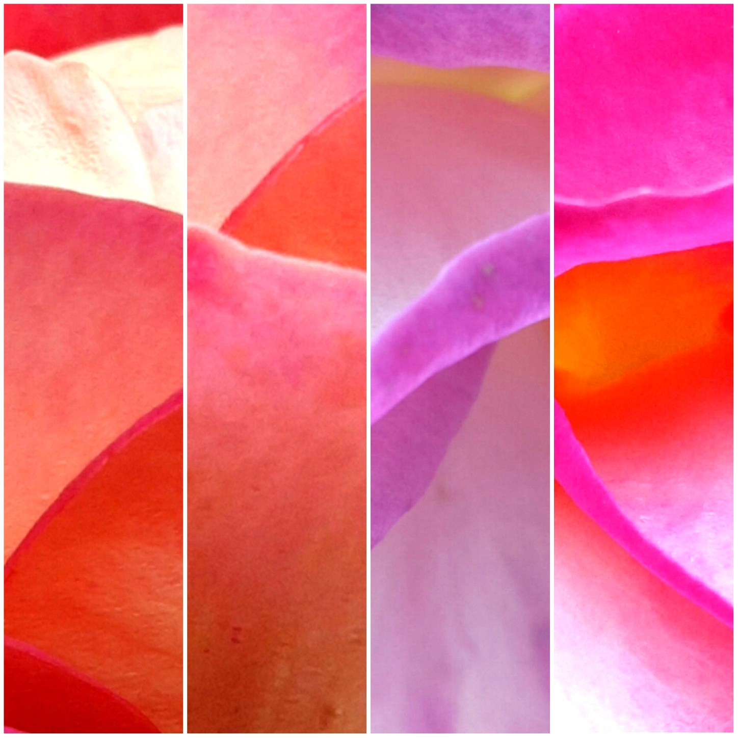 THE YEAR OF THE ROSES /  SUBMISSIONS UNTIL 30 SEPTEMBER 2021