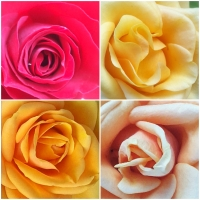 THE YEAR OF THE ROSES /  SUBMISSIONS UNTIL 30 SEPTEMBER: ROSES AS ARCHITECTURE